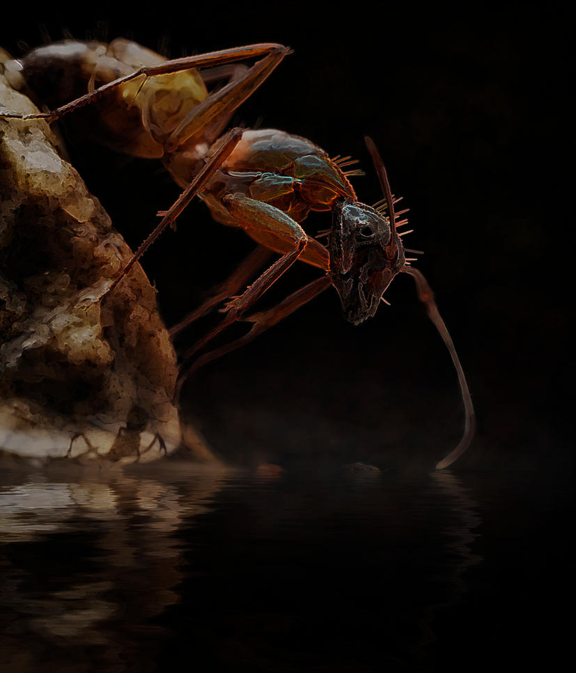 reflection of an ant 3 (topaz) by pfrancke