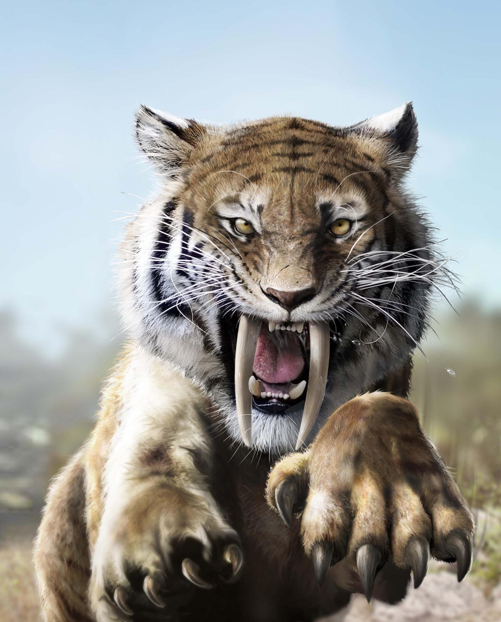 Siber tooth tiger
