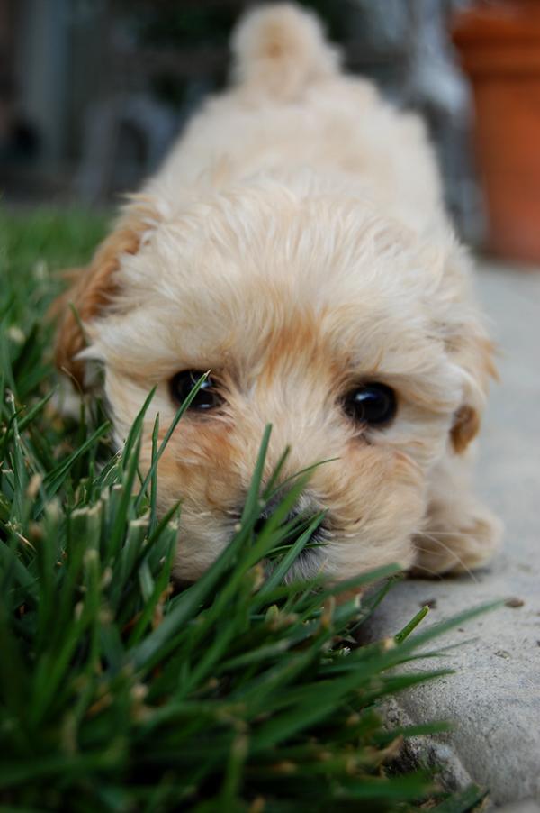hello, puppy