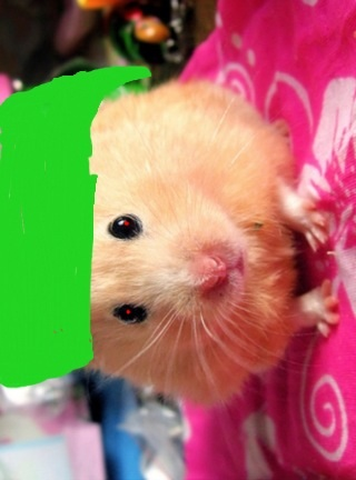 hamster ben drowned x reader fanfiction picture by