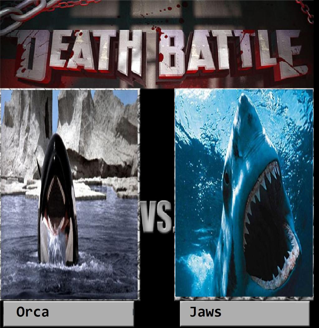 Killer Whale Vs Orca
