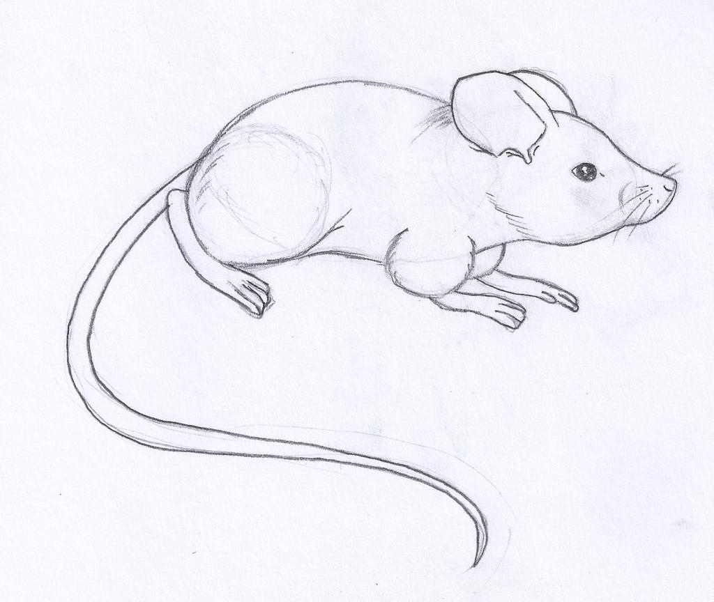 Mouse by UndertakerisEpic