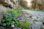 Stop and smell the violets
