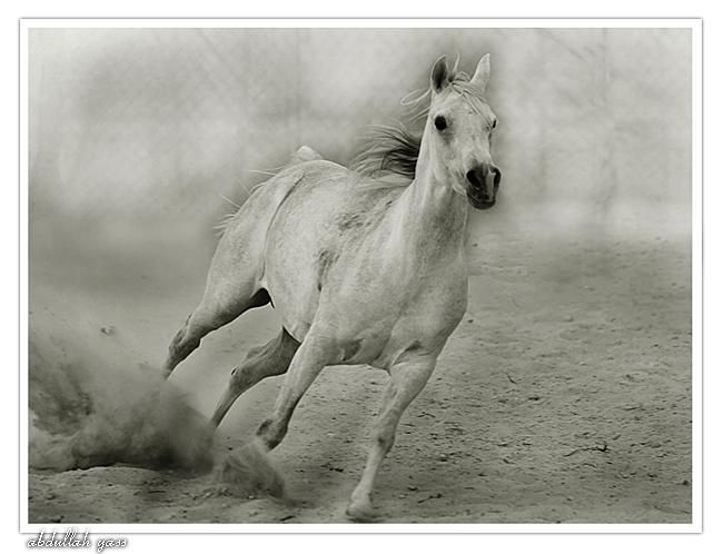 horse by haddaq