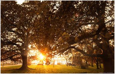 autumn rays 2011