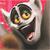 Happy Julien icon by SugaryDonutz