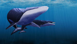 Fin Whale by tavotrio