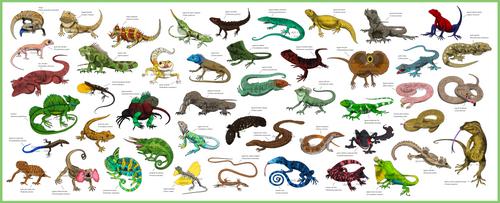 Guide - Lizards by FreakyRaptor