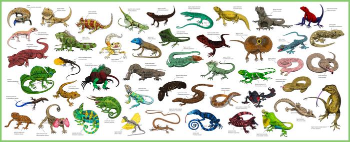 Guide - Lizards