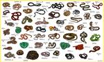 Guide - Snakes by FreakyRaptor