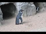 Penguin by Razgar
