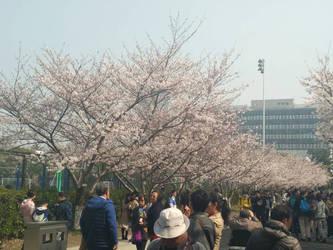 my school ^^ by zhouchujia