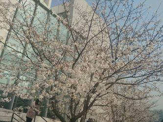 resized JPEG 1491212993348 -19007311 by zhouchujia