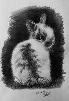 a bunny #30 by long-haired-lady