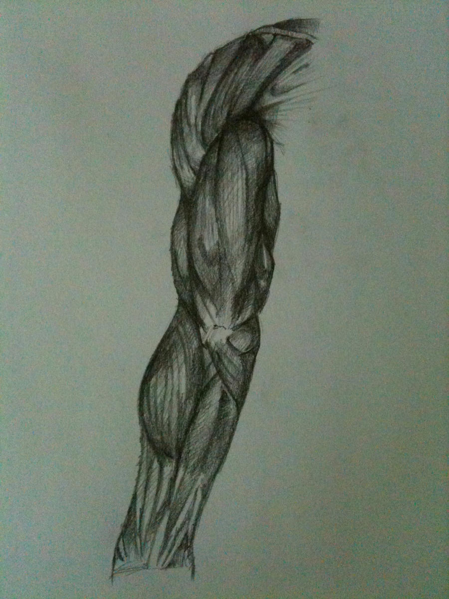 Human Anatomy Sketch 8 By Ronlau On Deviantart