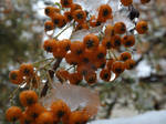 Icy droplets, bright colours, winter. by Pixie-Aztechia