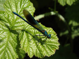 As the Dragonfly perches onto the leaf. by Pixie-Aztechia