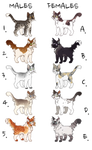 Cat Breedables || parents open for purchase