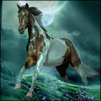 HEE #23 CE Chaska by CrystalSong-Acres