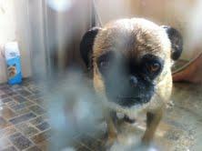 Love Pug Love by Kip517