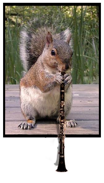 squirrel playing the clarinet by deaddonkeysrule on deviantart