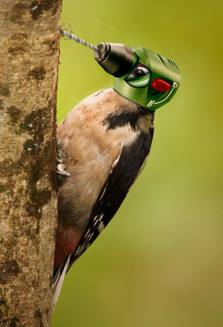 drill_bird_by_deaddonkeysrule.jpg
