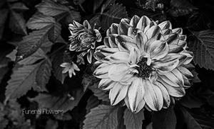 Funeral Flowers by Jscenery