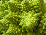 Natural Fractal - Close-up by WindyPower