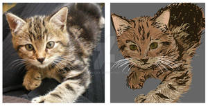 Kiwii -  the cat