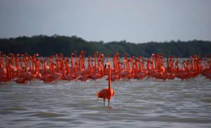 Those Damn Flamingos