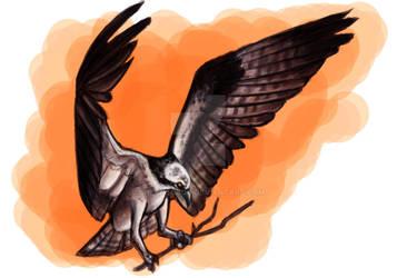 Osprey Sketch
