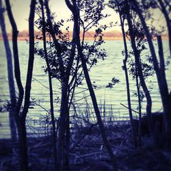 Beach Trees by dreamer07079