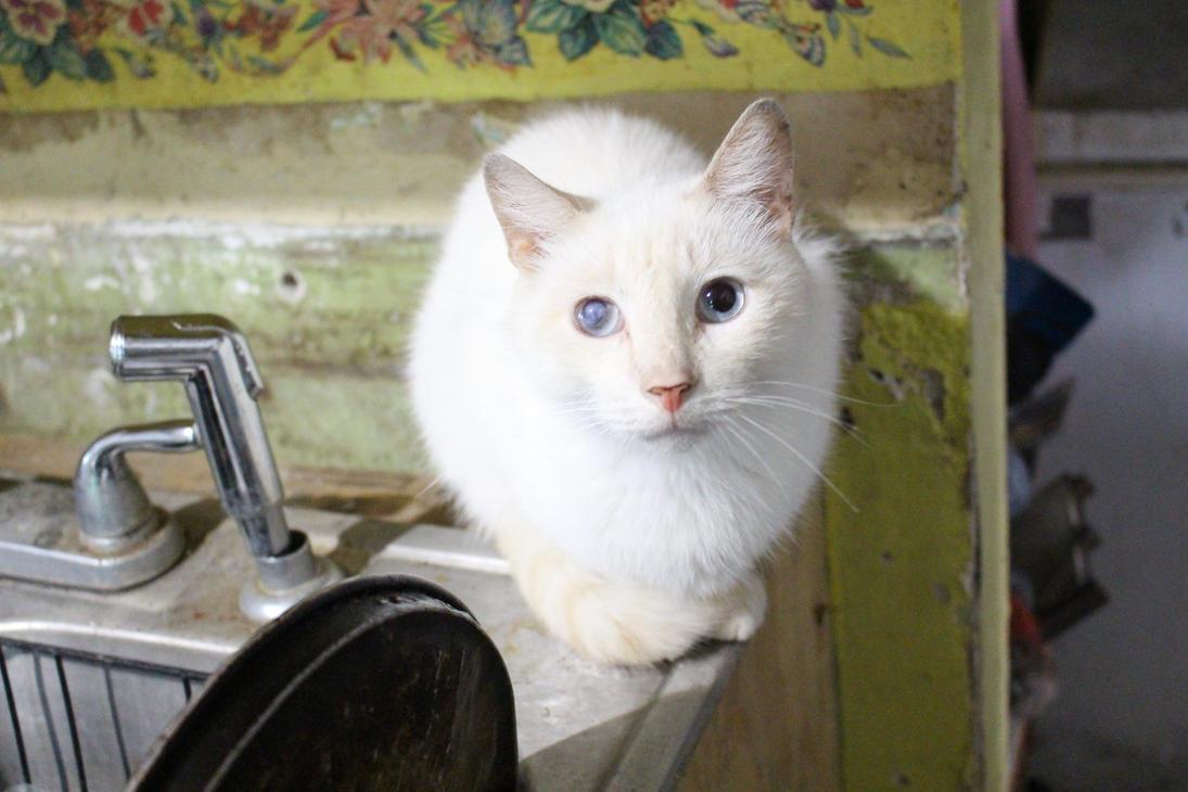 Casper the friendly Cat by SmasherlovesBunny500