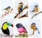 Birds - CG watercolor