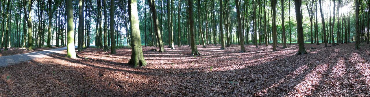 Panorama 2 - Rijswijk Bos by dierat-stock