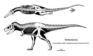 Tarbosaurus skeleton