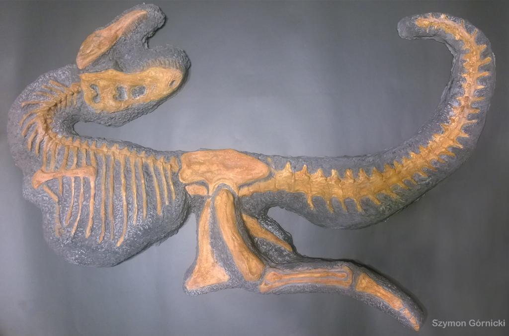 Tarbosaurus skleton model 1:10 by Szymoonio