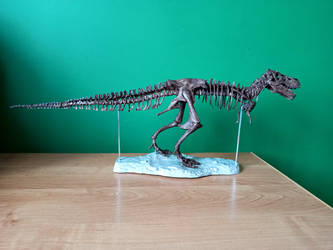 1:20 scale Tyrannosaurus skeleton model 4