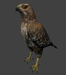 hawk inGame render by SaganTucker