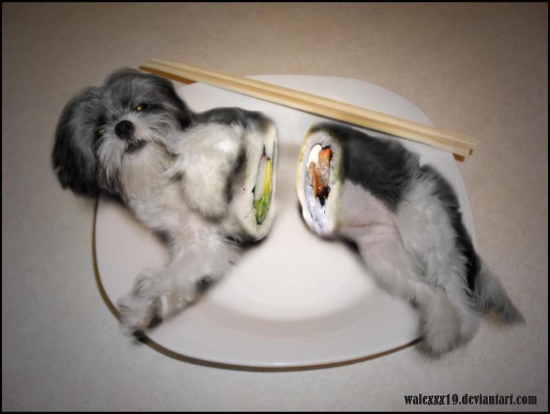 Beautiful Shih Tzu Anime Adorable Dog - shih_tzu_sushi_by_walexxx19  Best Photo Reference_68622  .jpg