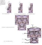 Anatomy of a Missingno.