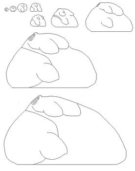 fat furry sides char templates