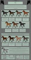 Nordanner Foals: Dun