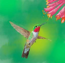 Koliber by Minstrella