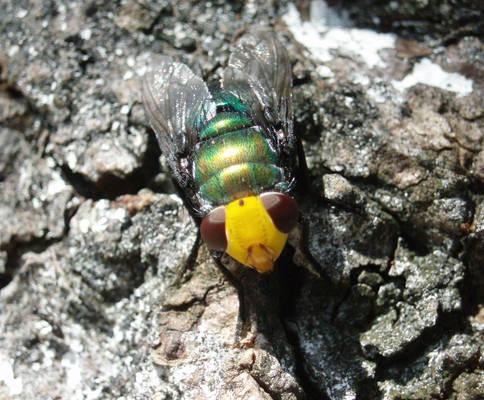 mr fly