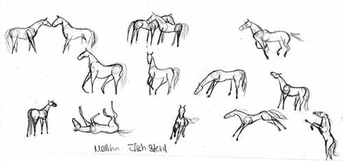 Horse proportions by sho0