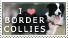 Border Collie Stamp by chinarose93