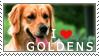 Golden Retriever Stamp by chinarose93