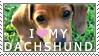 Dachshund Stamp by chinarose93