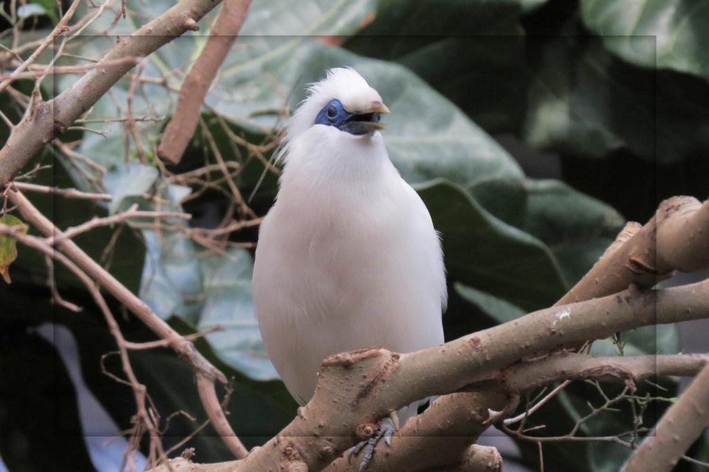 Little Bird or Mohawk Head by Joe-Maccer